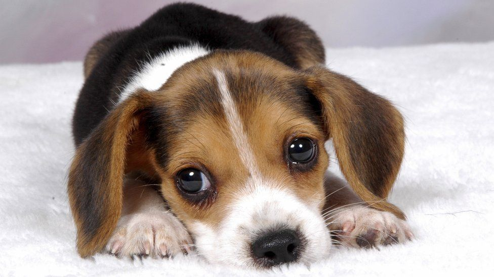 Coerência, essa cachorra