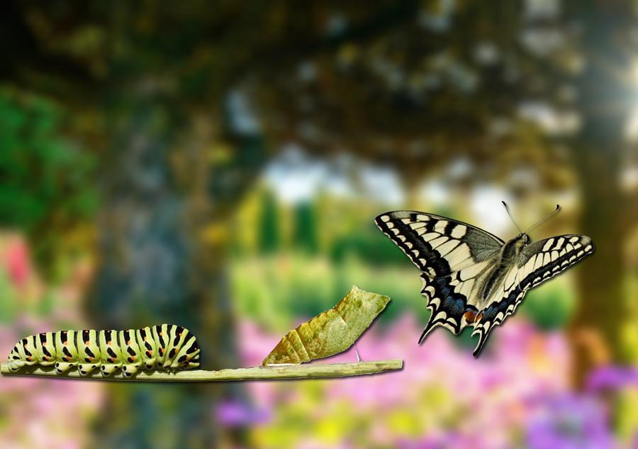 Café Brasil 664 – Sobre lagartas e borboletas